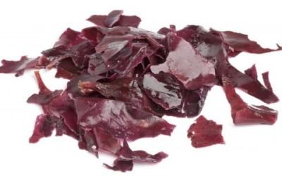 palamaria e1438181697940 400x250 1 - Alga dulse: un'alga al sapore di bacon - ricette-vegane-dal-web-