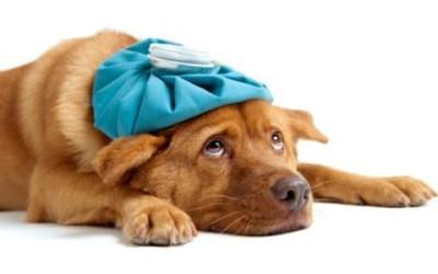 rimedi naturali animali domestici 400x250 1 - Come curare gli animali domestici in modo naturale - ricette-vegane-dal-web-
