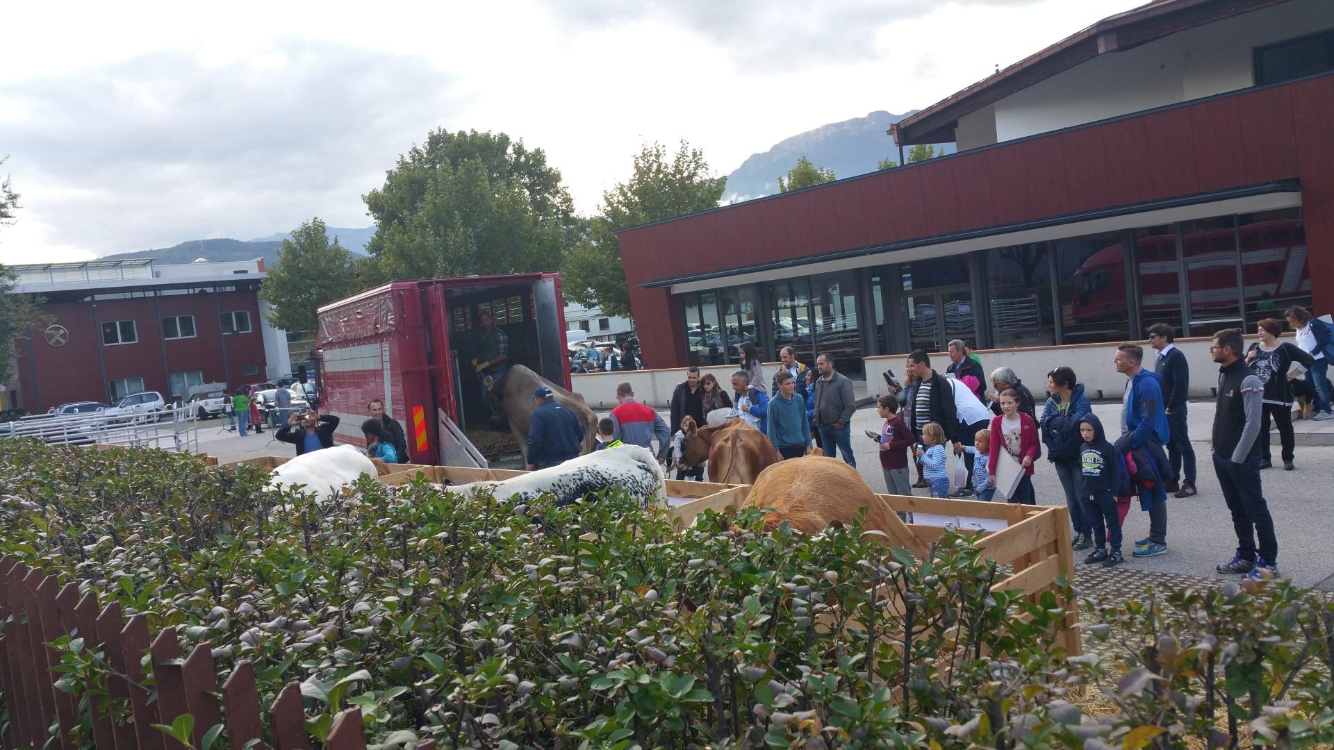 20161015 160611 - Fronte animalista Bolzano - Manifestazione Porte aperte 10 anni della casa della zootecnia