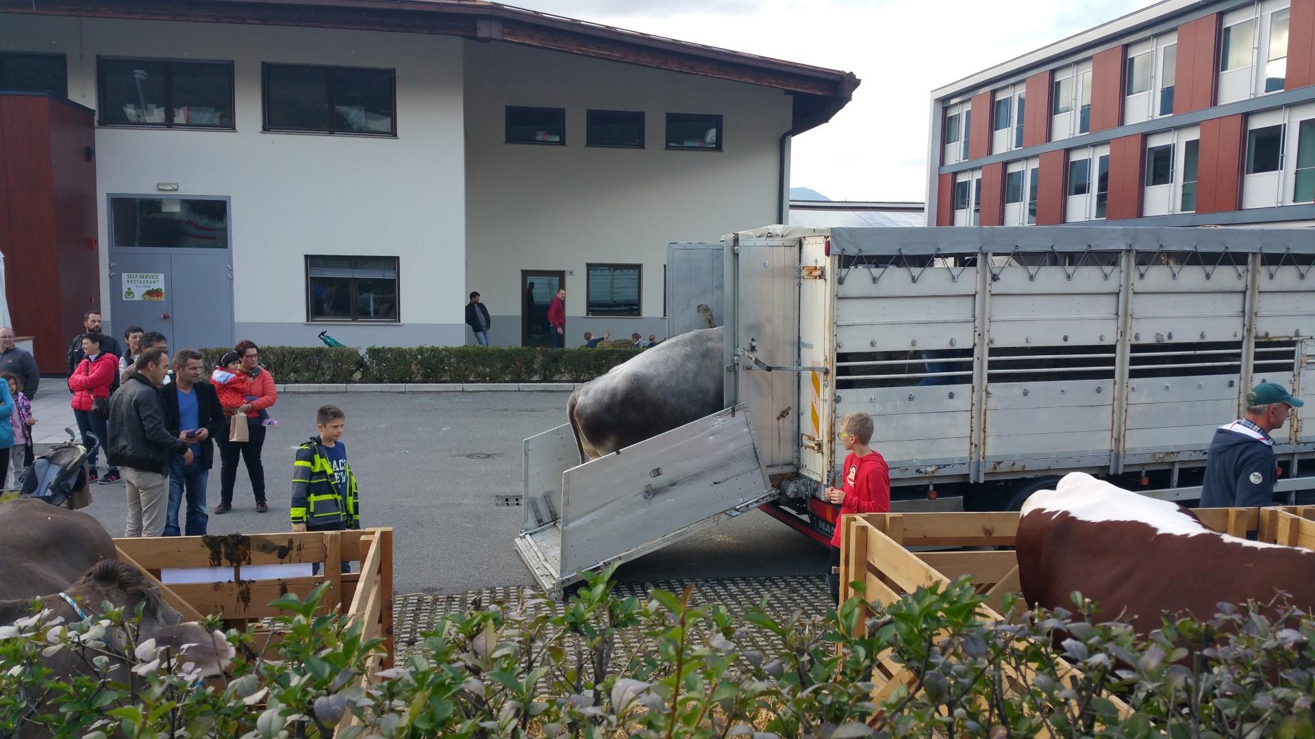 20161015 160704 - Fronte animalista Bolzano - Manifestazione Porte aperte 10 anni della casa della zootecnia