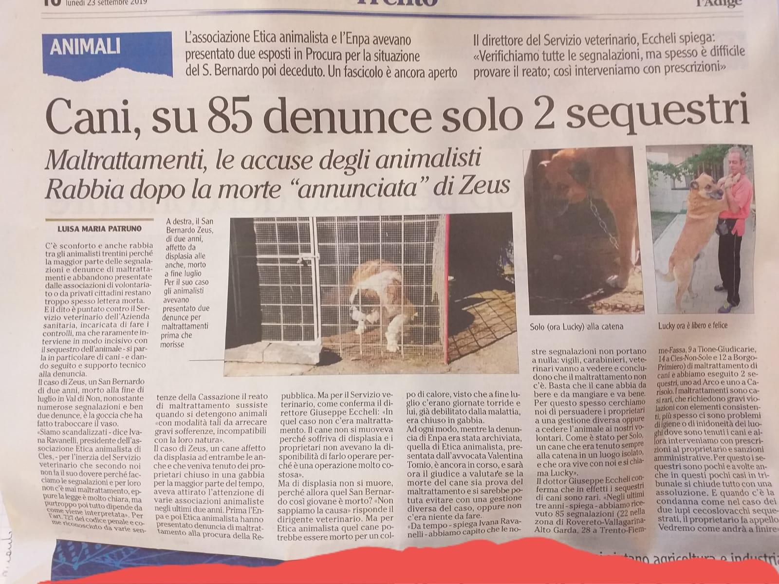 WhatsApp Image 2019 09 23 at 14.19.13 - Cani maltrattati, solo 2 sequestri su 85 segnalazioni (L'Adige) - blog-