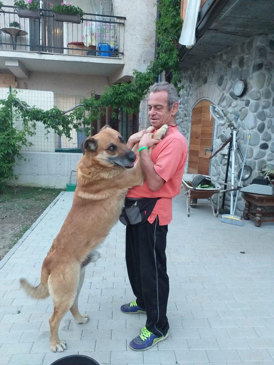 luCKY - Cani maltrattati, solo 2 sequestri su 85 segnalazioni (L'Adige) - blog-